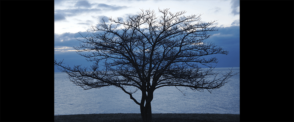 Tree Beside a Lake